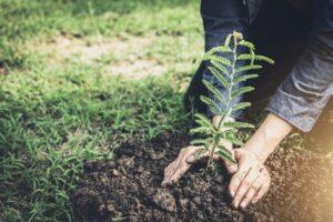Baum einpflanzen für jede abgegebene Bewertung